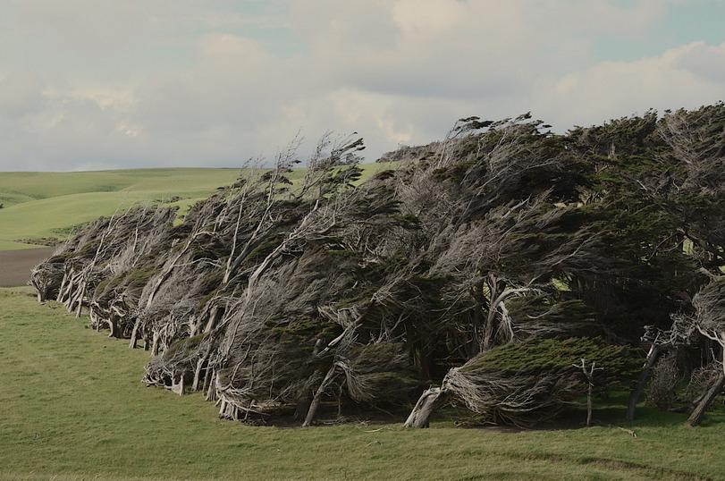 Деревья, Новая Зеландия