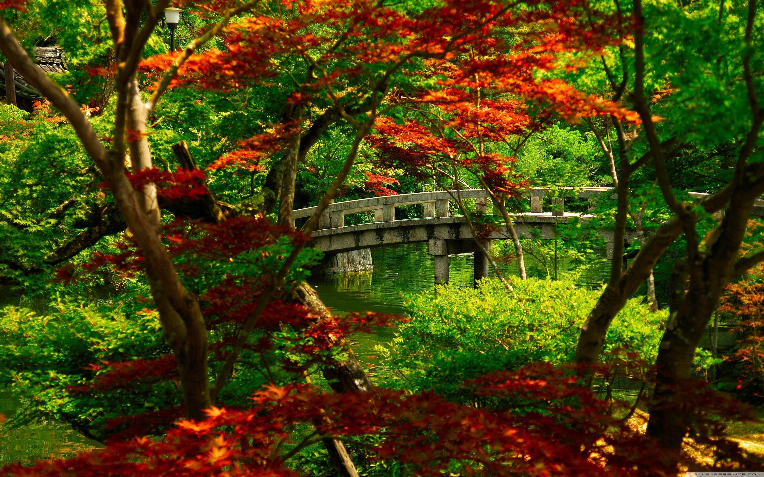 Обои для рабочего стола, природа, япония, разрешение 2560x1600